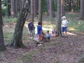 lesy v okoli RS